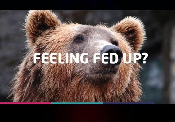 Cant Bear it thumbnail